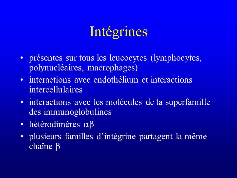 Intégrines présentes sur tous les leucocytes (lymphocytes, polynucléaires, macrophages) interactions avec endothélium et interactions intercellulaires