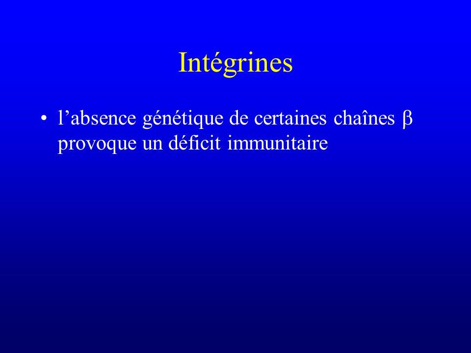 Intégrines labsence génétique de certaines chaînes provoque un déficit immunitaire