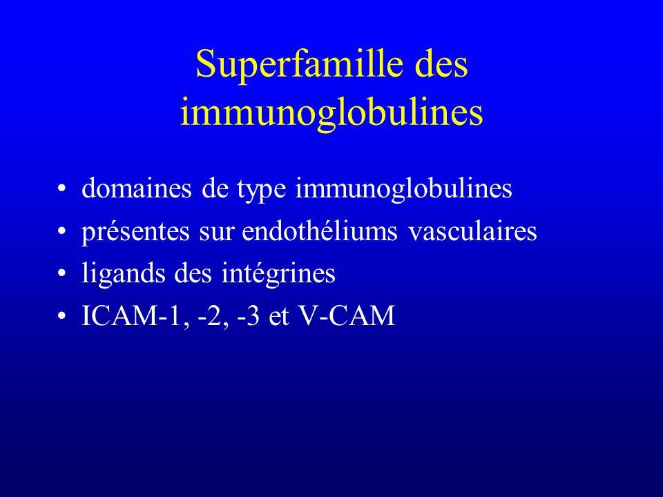 Superfamille des immunoglobulines domaines de type immunoglobulines présentes sur endothéliums vasculaires ligands des intégrines ICAM-1, -2, -3 et V-