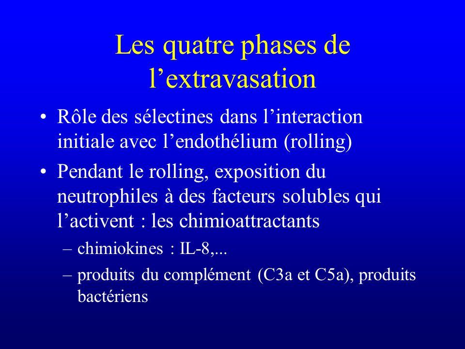 Rôle des sélectines dans linteraction initiale avec lendothélium (rolling) Pendant le rolling, exposition du neutrophiles à des facteurs solubles qui