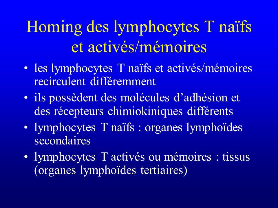 Homing des lymphocytes T naïfs et activés/mémoires les lymphocytes T naïfs et activés/mémoires recirculent différemment ils possèdent des molécules da