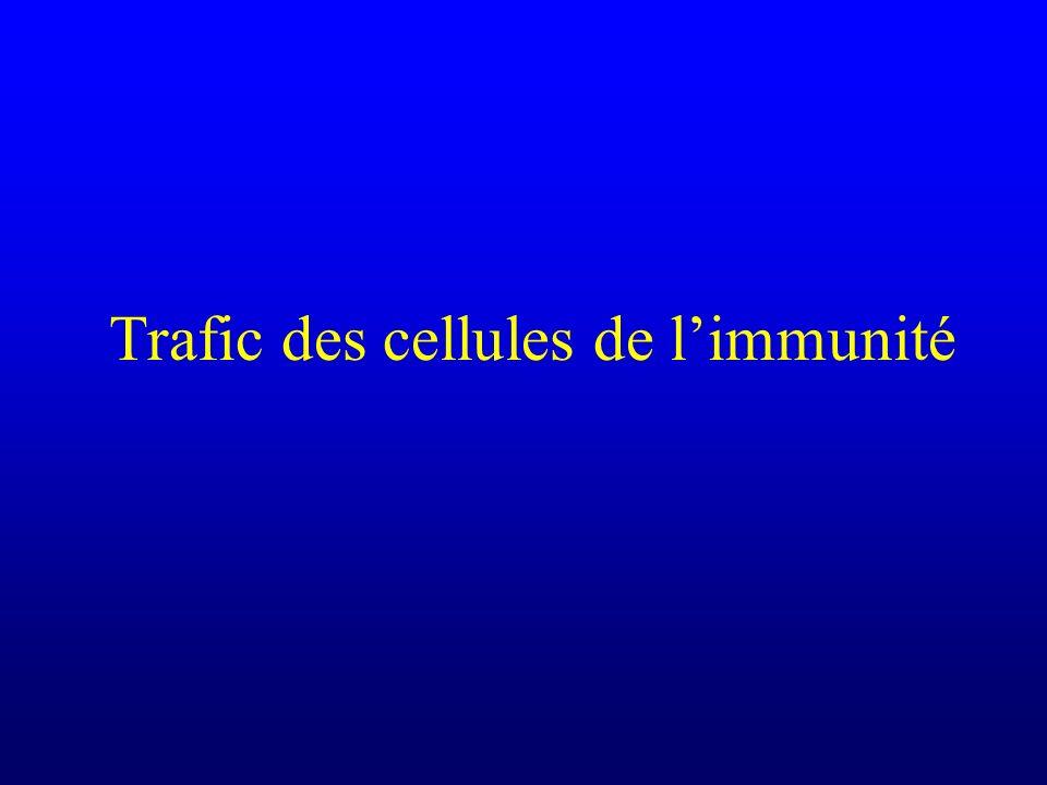 Trafic des cellules de limmunité