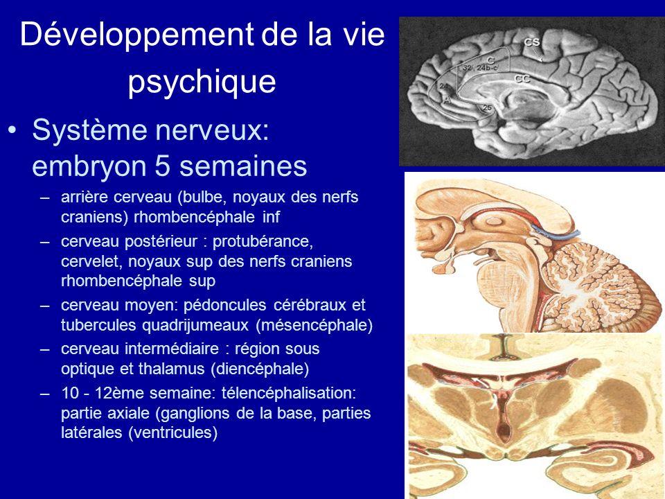 Développement de la vie psychique Système nerveux: embryon 5 semaines –arrière cerveau (bulbe, noyaux des nerfs craniens) rhombencéphale inf –cerveau