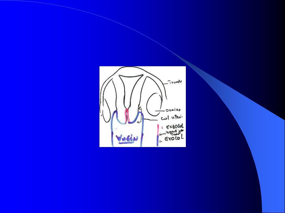 FACTEURS VIRAUX HUMAN PAPULOM VIRUS 16, 18, 33, 34, 35, 39, 45, 51, 52, 57, 58, 59 MODE DACTION DE LHPV: INTEGRATION DU GENOME OU DE SEGMENTS DE GENOMES CODANTS APPELES POL(PHASE OUVERTE DE LECTURE) ET OPEN READING FRAME(ORF E6 ET ORF E7)