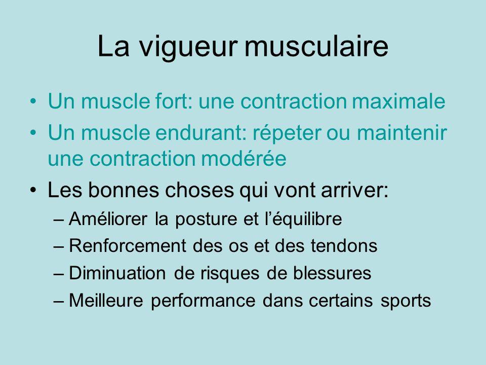 La vigueur musculaire Un muscle fort: une contraction maximale Un muscle endurant: répeter ou maintenir une contraction modérée Les bonnes choses qui