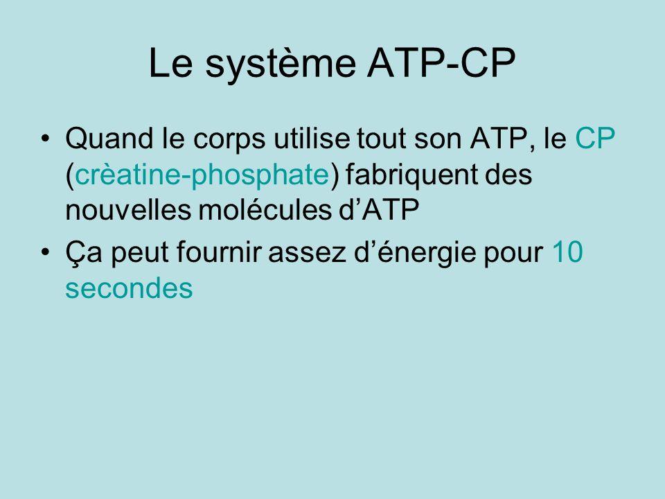 Le système ATP-CP Quand le corps utilise tout son ATP, le CP (crèatine-phosphate) fabriquent des nouvelles molécules dATP Ça peut fournir assez dénerg