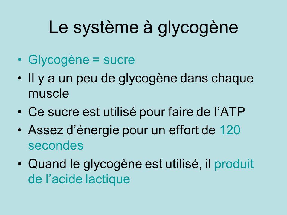 Le système à glycogène Glycogène = sucre Il y a un peu de glycogène dans chaque muscle Ce sucre est utilisé pour faire de lATP Assez dénergie pour un