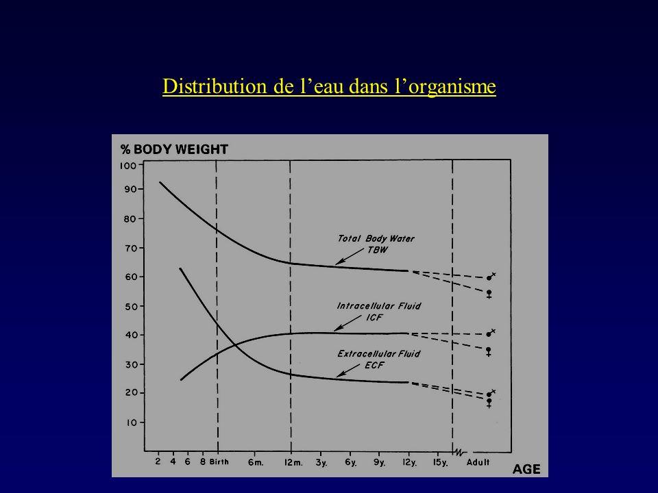 Distribution de leau dans lorganisme