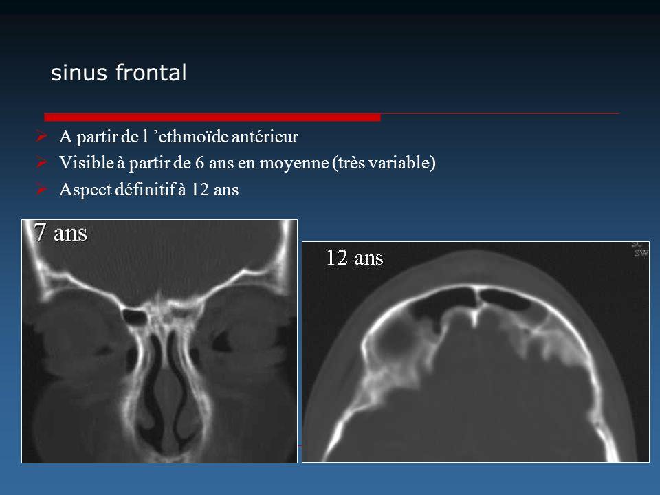 sinus frontal A partir de l ethmoïde antérieur Visible à partir de 6 ans en moyenne (très variable) Aspect définitif à 12 ans