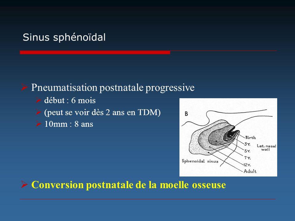 Pneumatisation postnatale progressive début : 6 mois (peut se voir dès 2 ans en TDM) 10mm : 8 ans Conversion postnatale de la moelle osseuse Sinus sph
