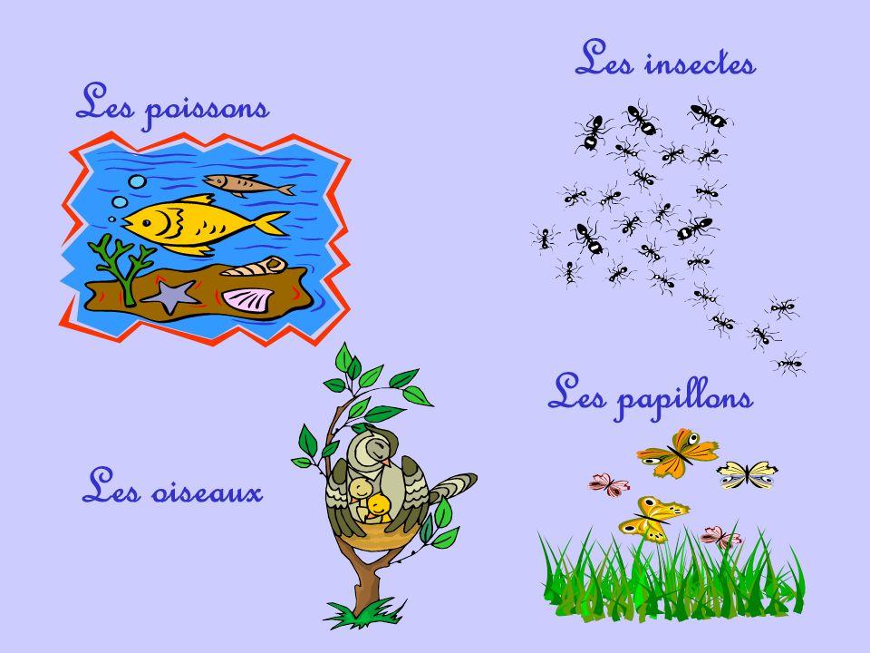 Les poissons Les insectes Les oiseaux Les papillons