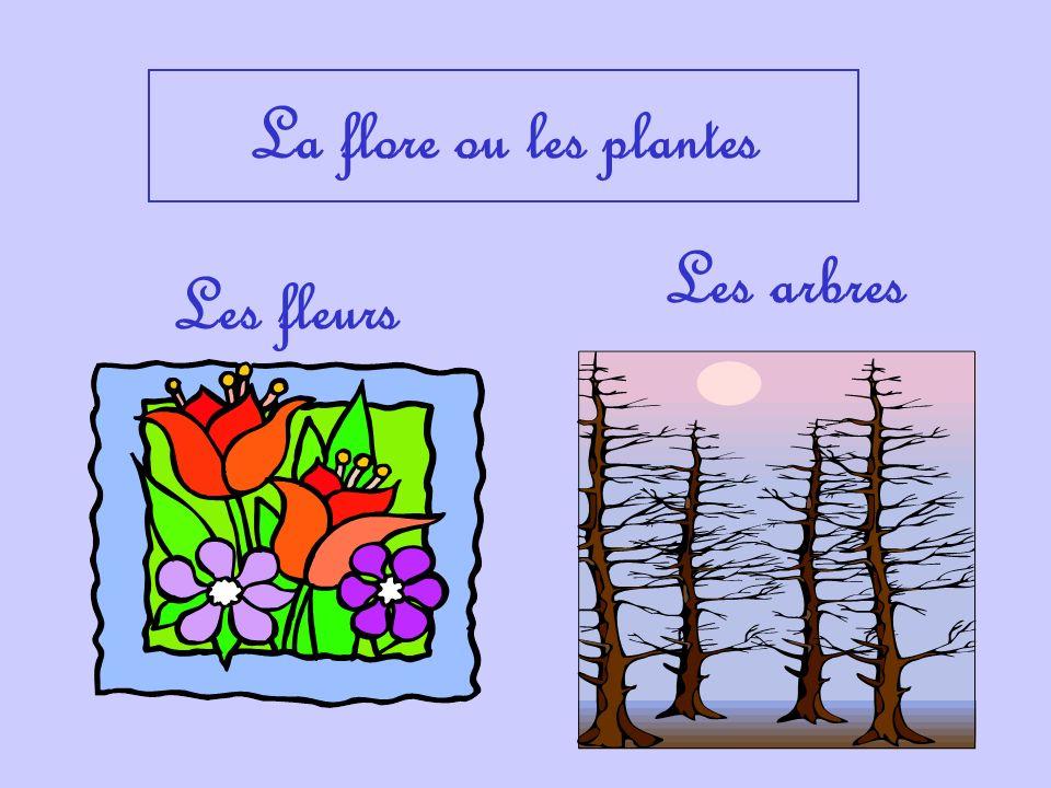 La flore ou les plantes Les fleurs Les arbres