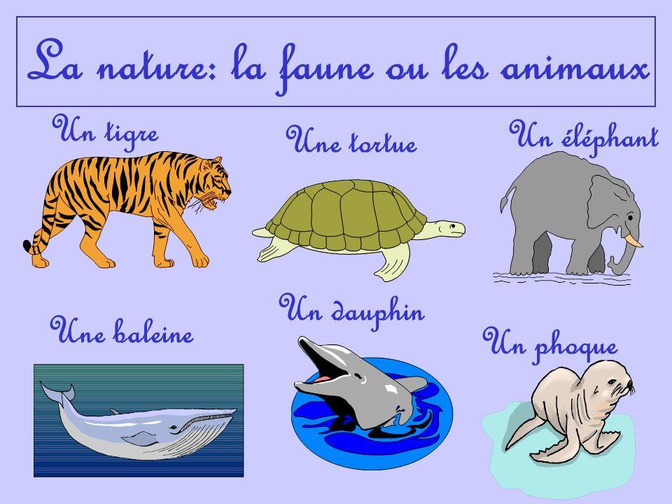 La nature: la faune ou les animaux Un tigre Un éléphant Une baleine Un dauphin Une tortue Un phoque