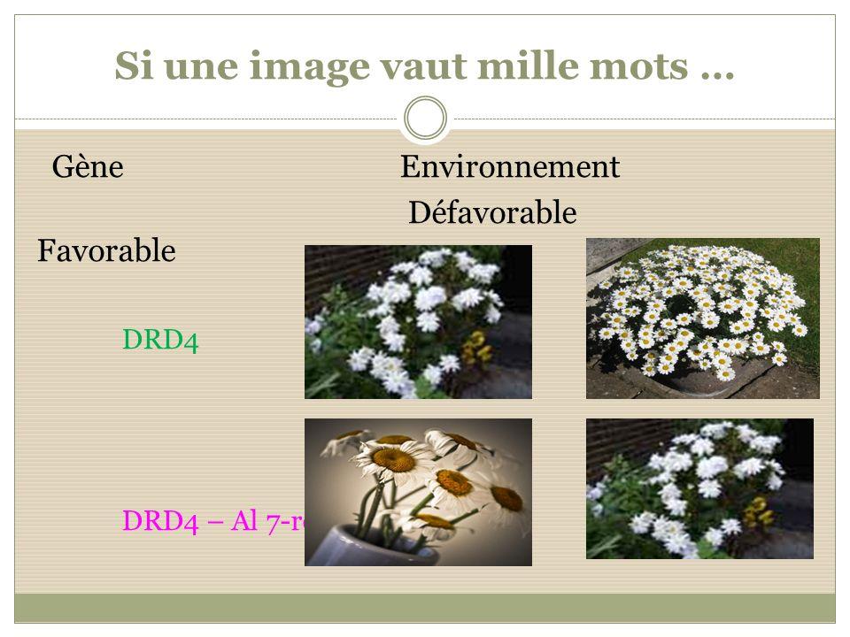 Si une image vaut mille mots … Gène Environnement Défavorable Favorable DRD4 DRD4 – Al 7-rép.