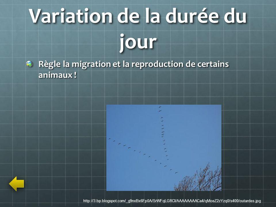 Variation de la durée du jour Règle la migration et la reproduction de certains animaux ! http://3.bp.blogspot.com/_g9nxBx6Fp0A/SrWFqLGflCI/AAAAAAAACa