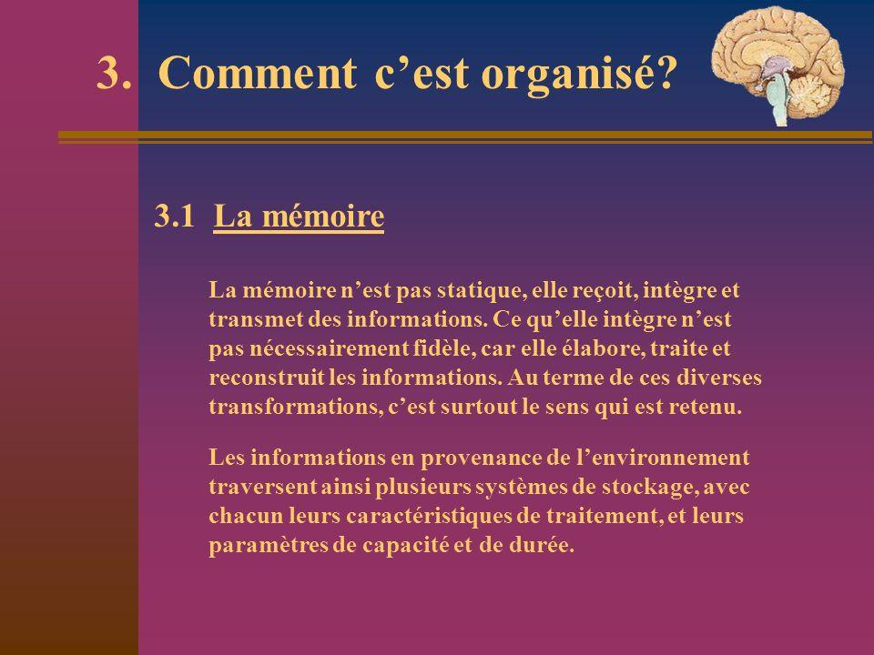 3.1 La mémoire La mémoire nest pas statique, elle reçoit, intègre et transmet des informations. Ce quelle intègre nest pas nécessairement fidèle, car