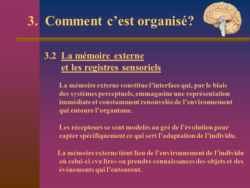 3. Comment cest organisé? 3.2 La mémoire externe et les registres sensoriels La mémoire externe constitue linterface qui, par le biais des systèmes pe