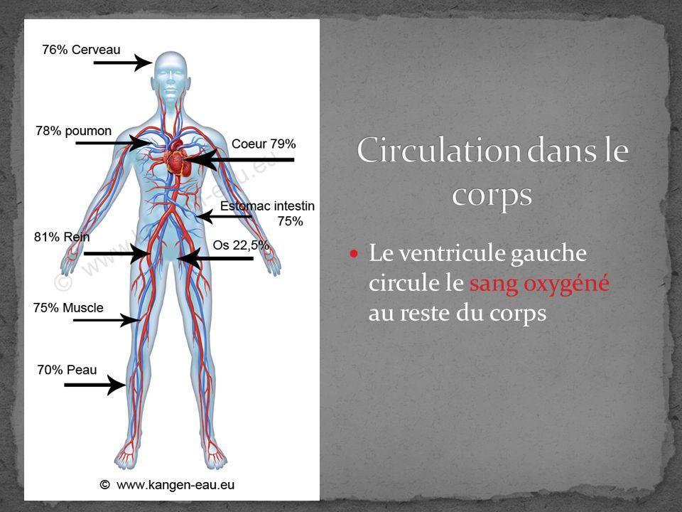 ARTÈRE: (A away) emmène le sang hors du cœur VEINE: ramène le sang au cœur ARTÉRIOLES: petits artères VEINULES: petits veines CAPILLAIRES: mini vaisseaux qui font une échange de gaz nutriments