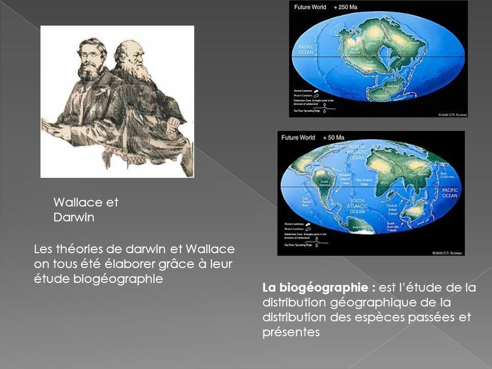 La biogéographie : est létude de la distribution géographique de la distribution des espèces passées et présentes Wallace et Darwin Les théories de darwin et Wallace on tous été élaborer grâce à leur étude biogéographie