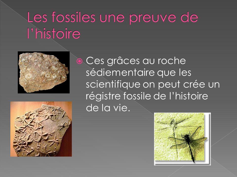 Ces grâces au roche sédiementaire que les scientifique on peut crée un régistre fossile de lhistoire de la vie.