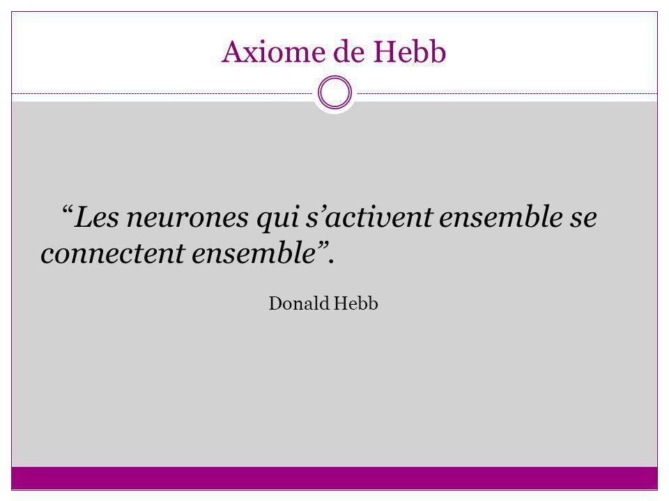 Axiome de Hebb Les neurones qui sactivent ensemble se connectent ensemble. Donald Hebb