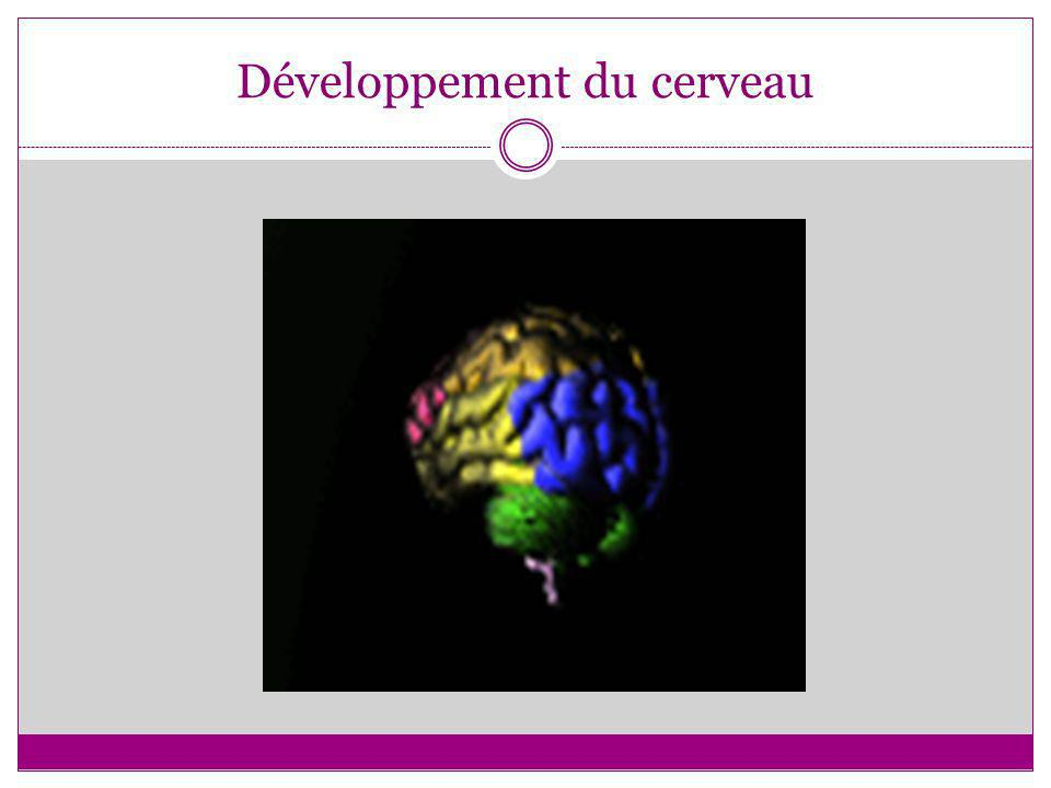Développement optimal du cerveau Des connections fortes entre les régions corticales hautes et basses La pensée + le sentiment = un bon jugement