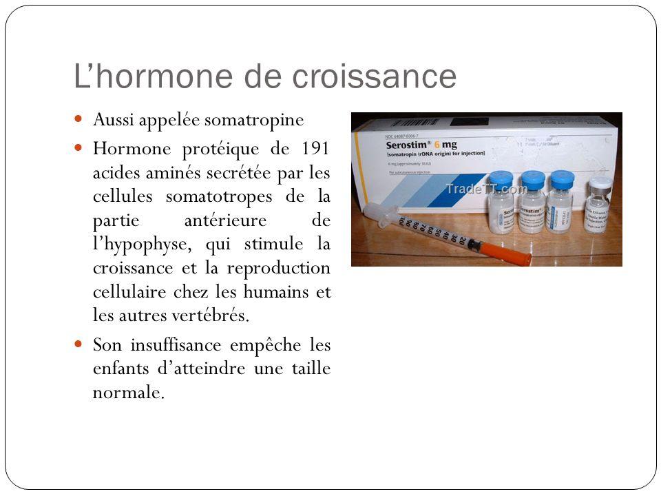 Lhormone de croissance Aussi appelée somatropine Hormone protéique de 191 acides aminés secrétée par les cellules somatotropes de la partie antérieure