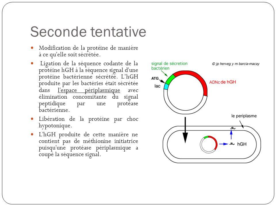 Seconde tentative Modification de la protéine de manière à ce qu'elle soit sécrétée. Ligation de la séquence codante de la protéine hGH à la séquence