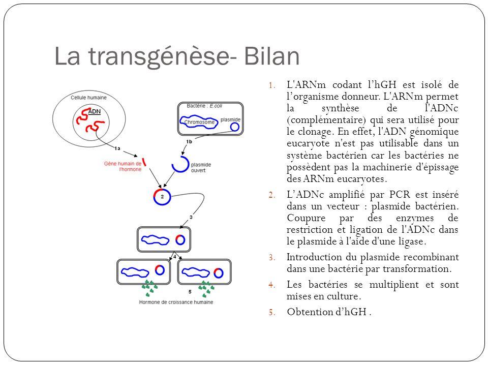 La transgénèse- Bilan 1. L'ARNm codant lhGH est isolé de lorganisme donneur. L'ARNm permet la synthèse de l'ADNc (complémentaire) qui sera utilisé pou