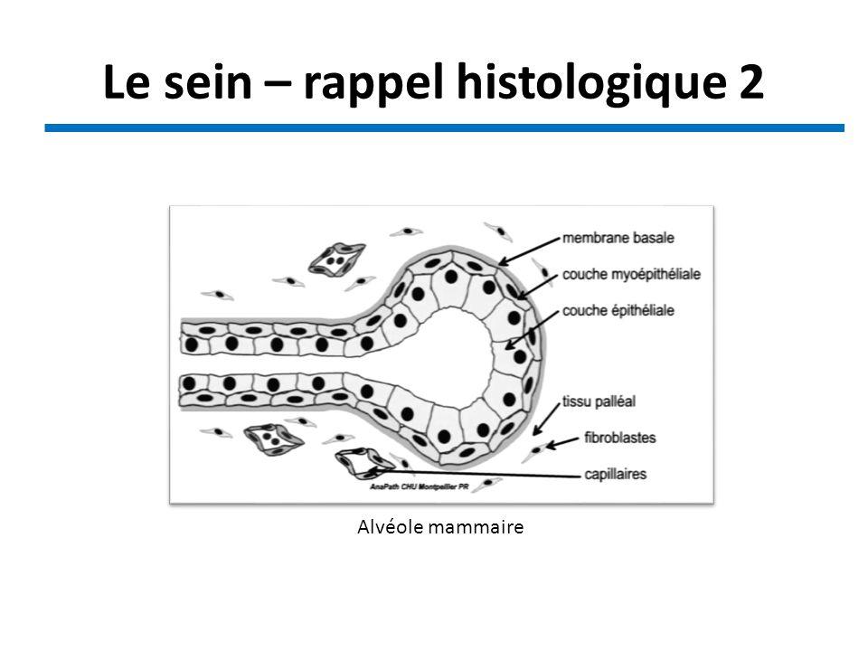 Alvéole mammaire Le sein – rappel histologique 2