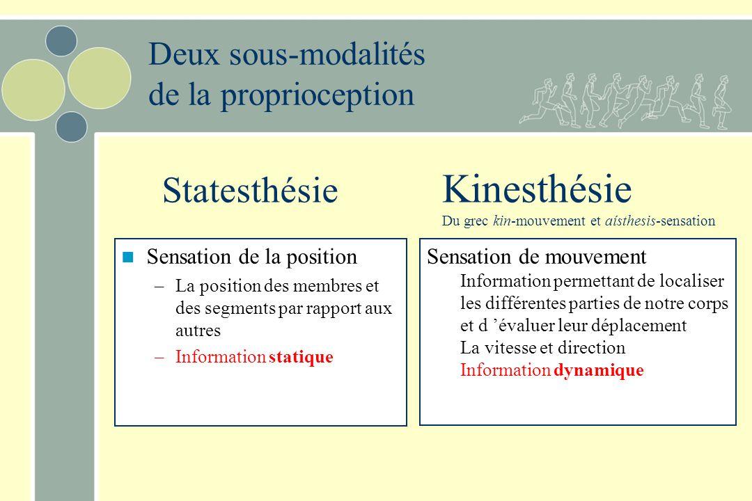 Proprioception Définitions –perception consciente et inconsciente du corps dans lespace, de la position, du mouvement des différentes parties du corps