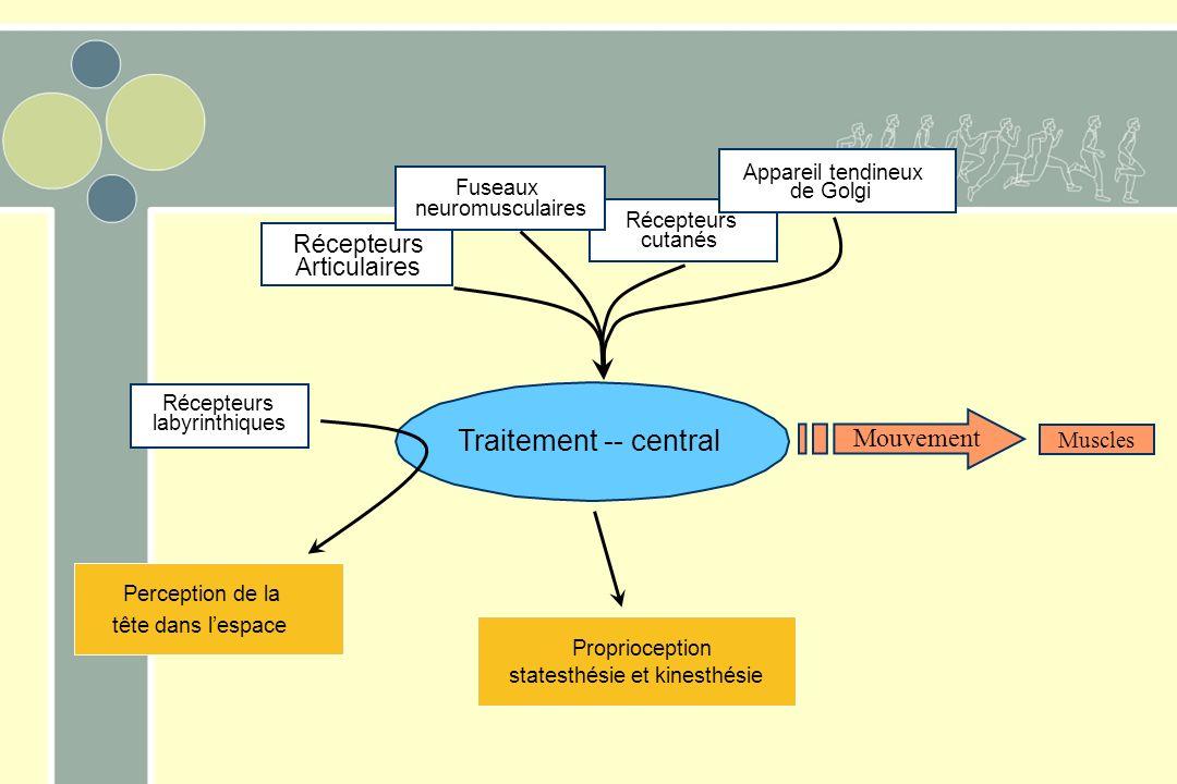 Récepteurs impliqués dans la proprioception Fuseau neuromusculaire Organe tendineux de Golgi Récepteurs articulaires Récepteurs vestibulaires Récepteu