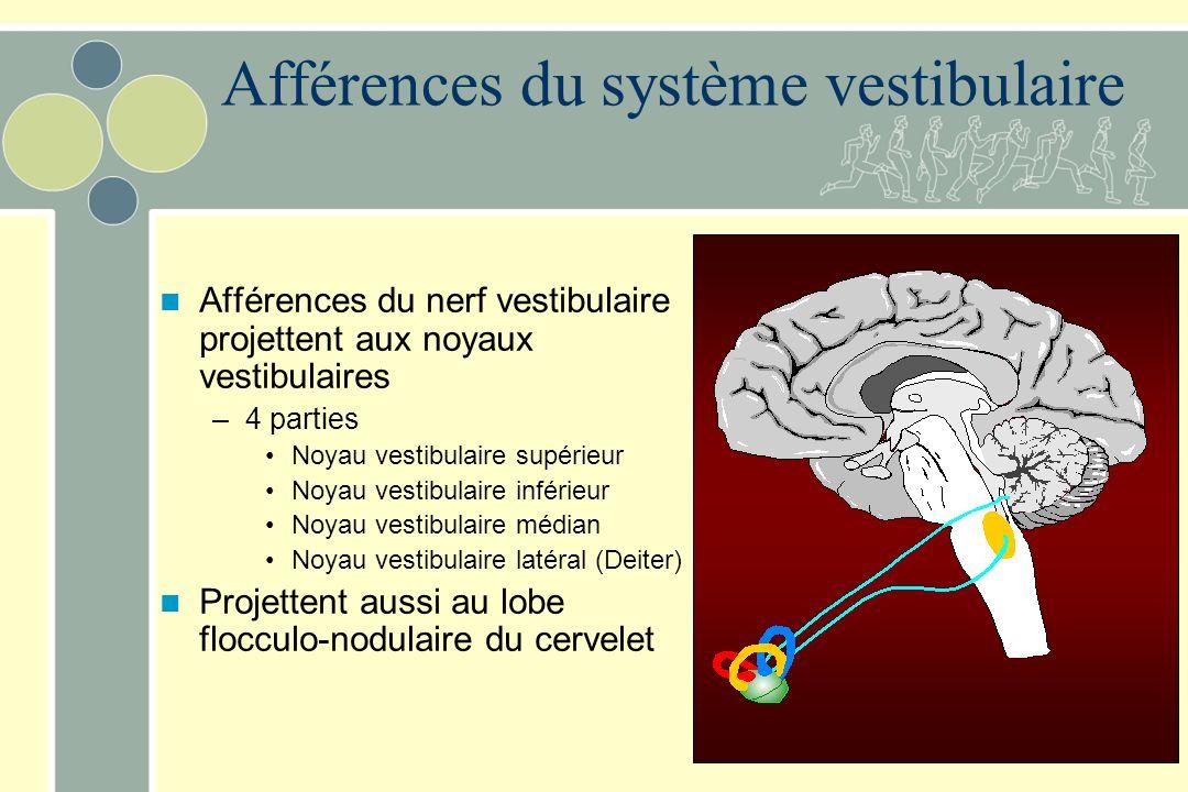 Linformation est acheminée vers le système nerveux central