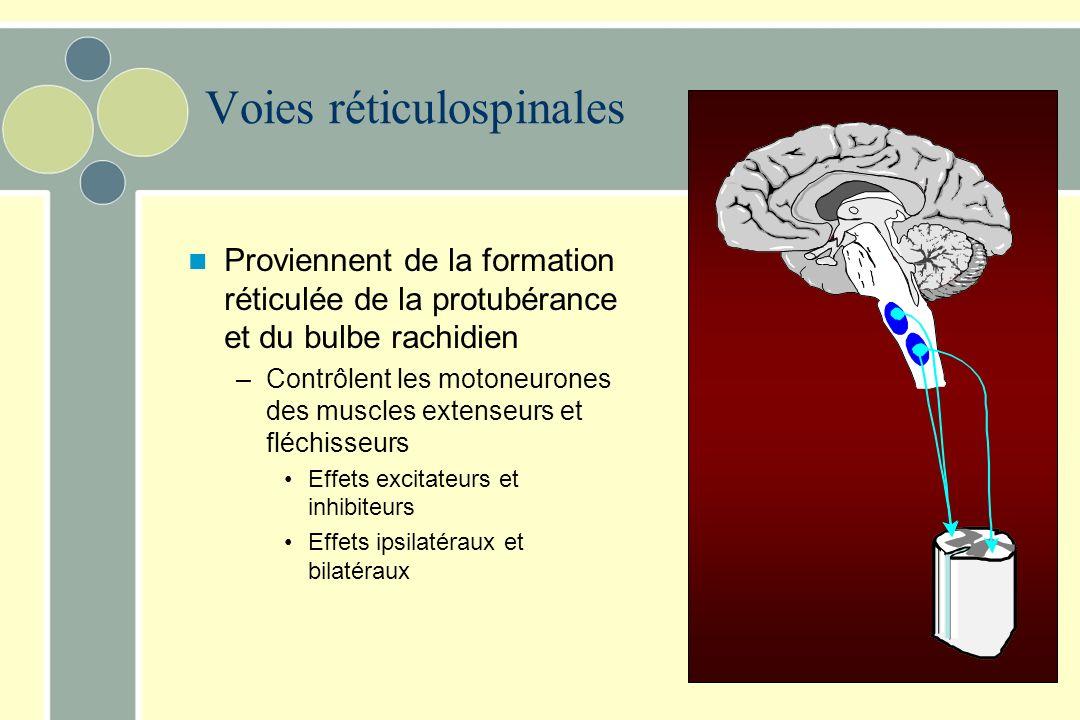 Origine des deux principales voies impliquées dans le contrôle de la posture Formation réticulée Noyaux vestibulaires