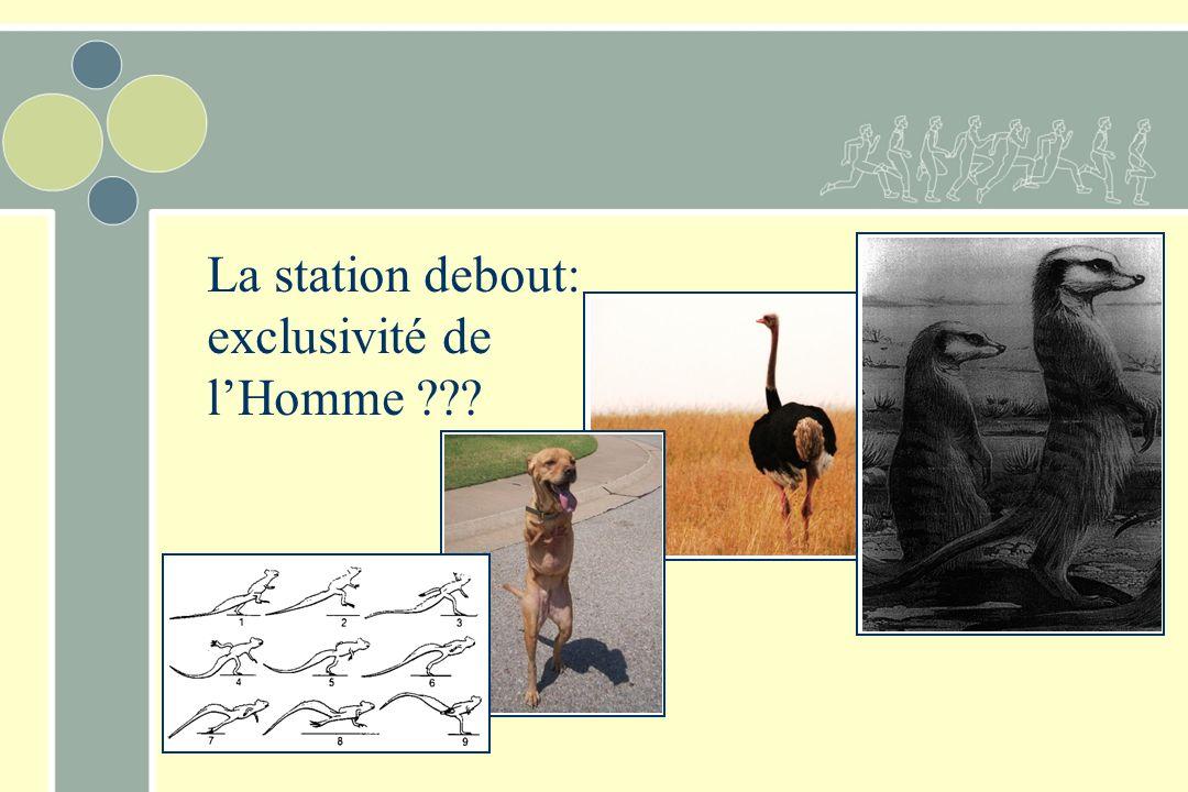 La station debout : particularité de lHomme… Base dappui