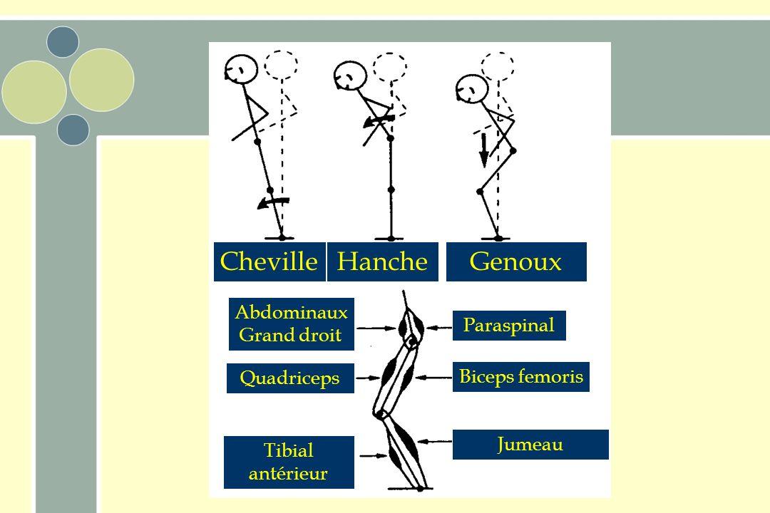 Cheville Hanche Réponses à des perturbations Plusieurs stratégies –cheville –hanche –flexion des genoux –pas vers lavant et étendre les bras pour amor