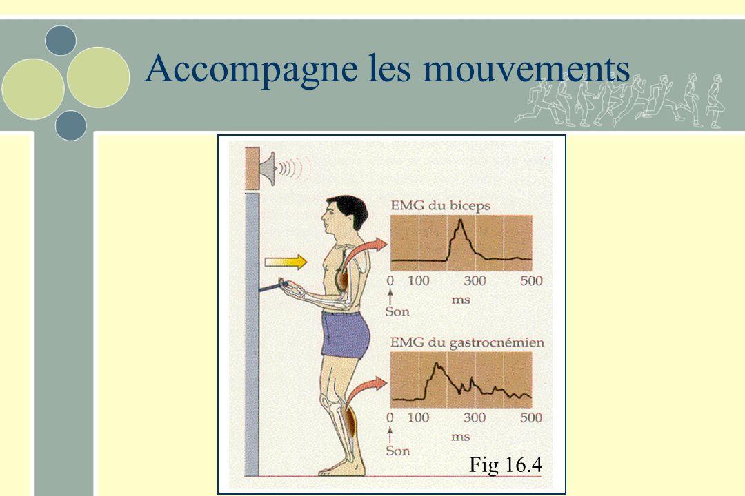 La posture assure une fonction antigravitaire Contrôle de l équilibre –Exige que la projection au sol du centre de gravité soit à lintérieur de la sur