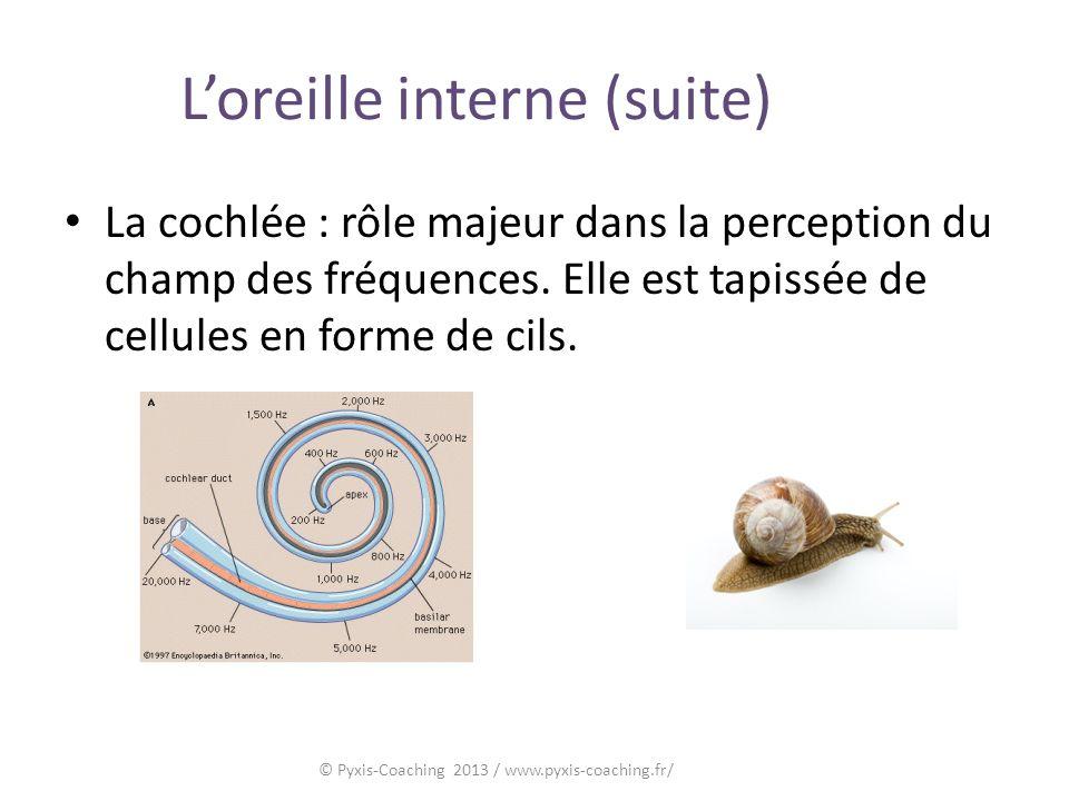 Loreille interne (suite) La cochlée : rôle majeur dans la perception du champ des fréquences.