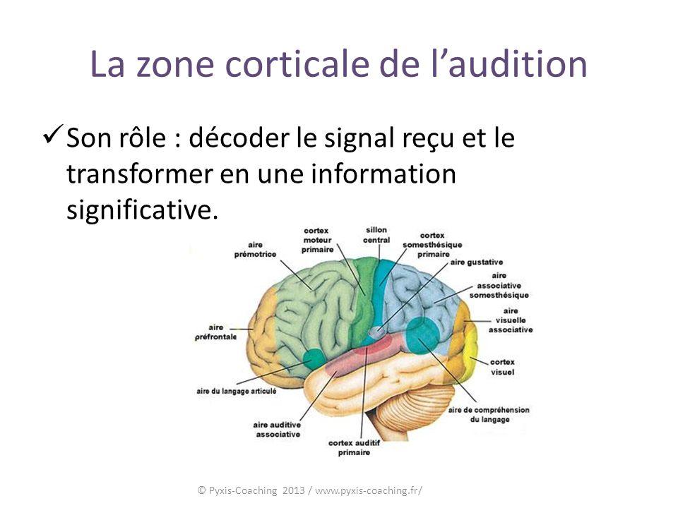 La zone corticale de laudition Son rôle : décoder le signal reçu et le transformer en une information significative.