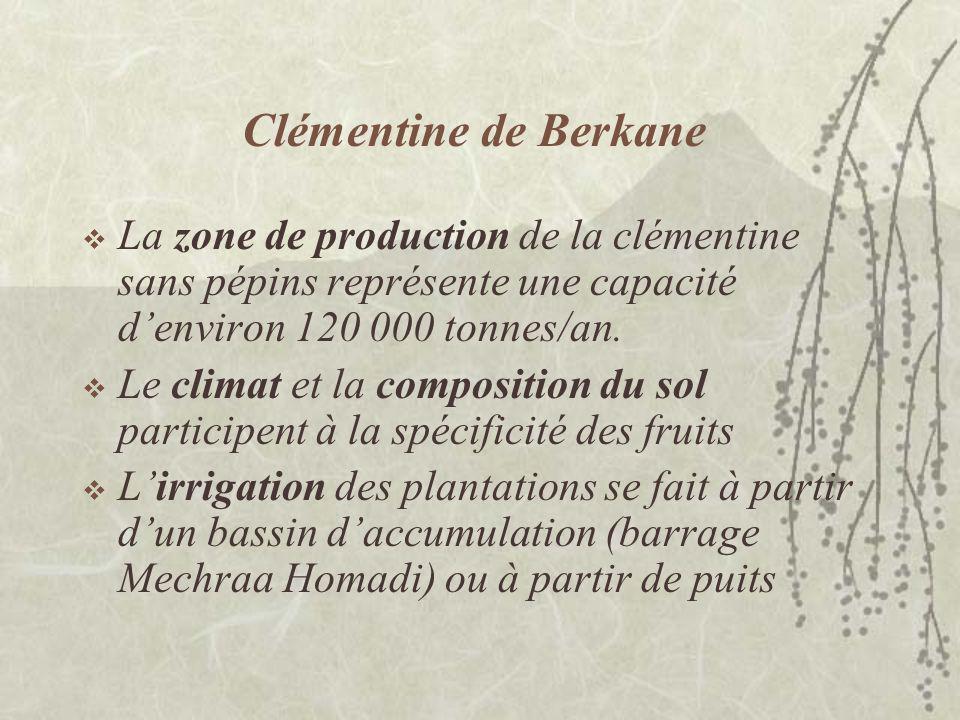 Clémentine de Berkane La filière « clémentine de Berkane » sarticule au sein de quatre groupes distincts : les producteurs, les conditionneurs, les groupes dexportation et les pôles dexportation.