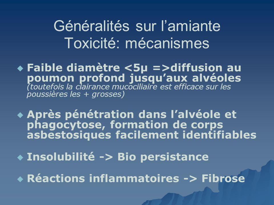 Généralités sur lamiante Toxicité: mécanismes Faible diamètre diffusion au poumon profond jusquaux alvéoles (toutefois la clairance mucociliaire est e
