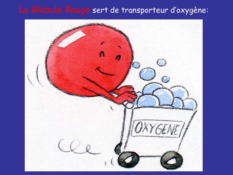 Le Globule Rouge sert de transporteur doxygène: