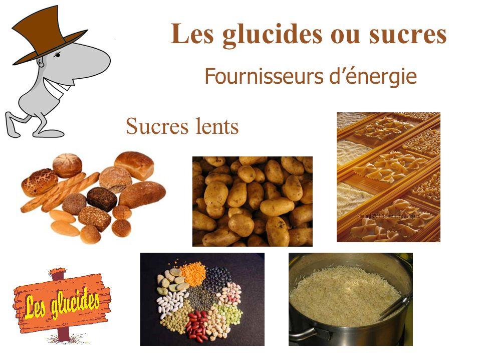 Les glucides ou sucres Sucres lents Fournisseurs dénergie