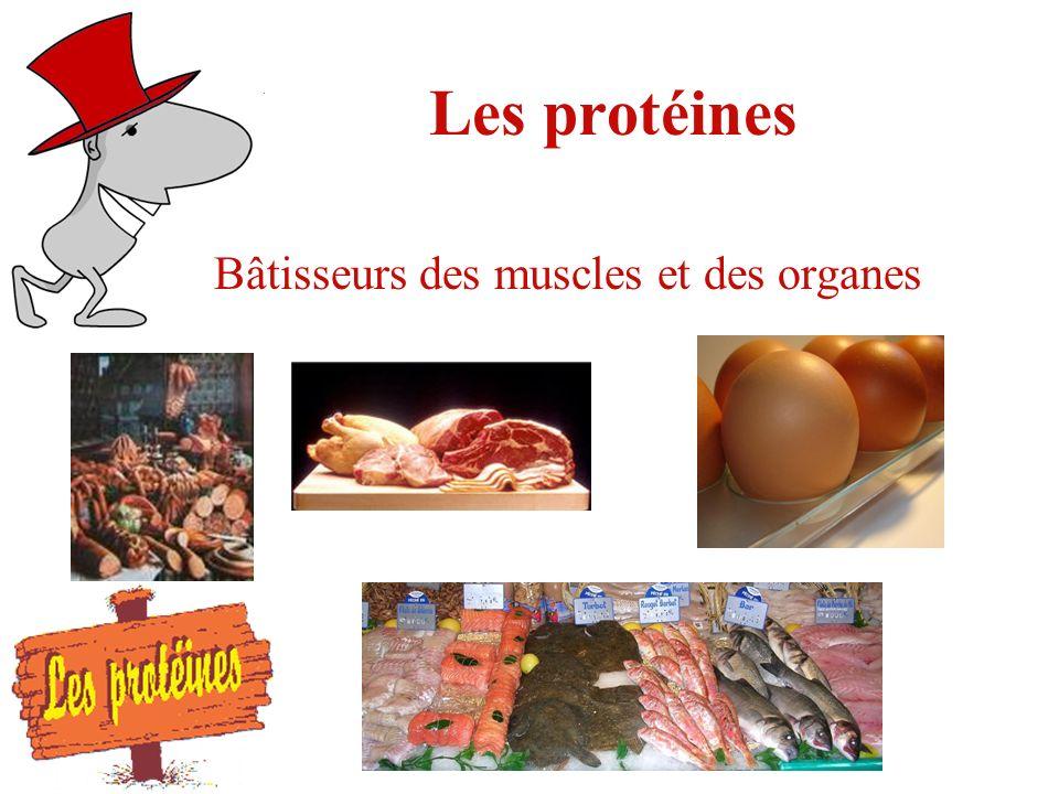 Les protéines Bâtisseurs des muscles et des organes