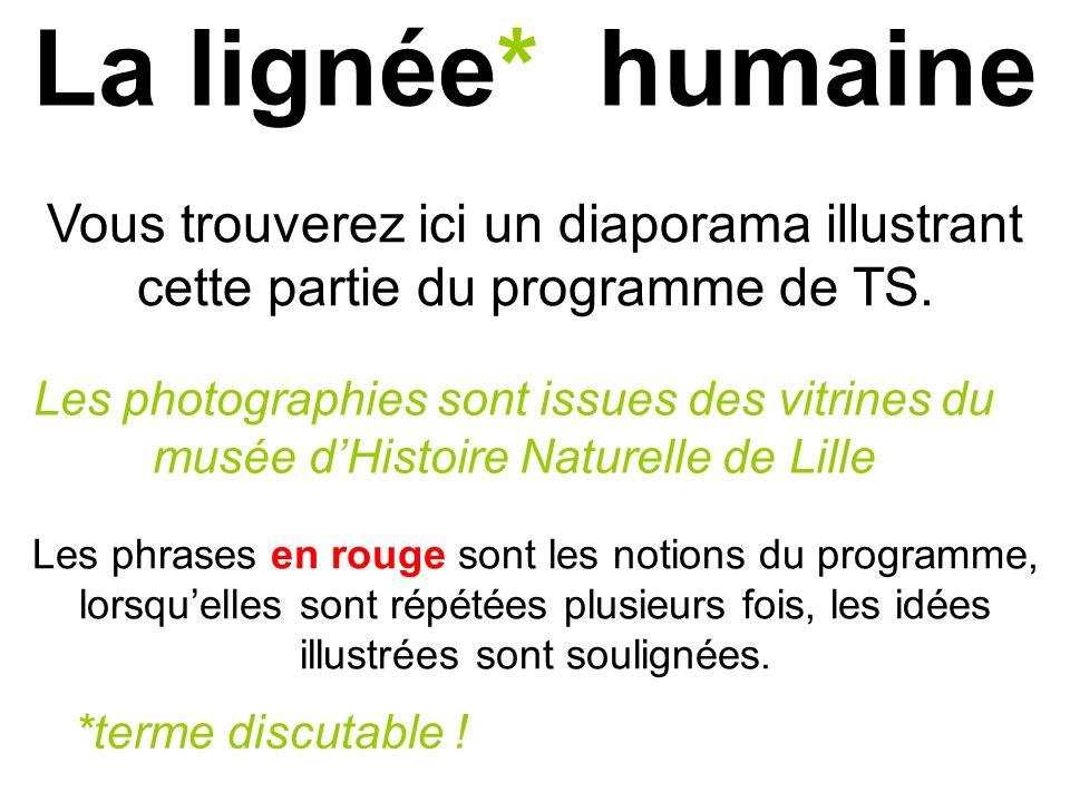 La lignée* humaine Les phrases en rouge sont les notions du programme, lorsquelles sont répétées plusieurs fois, les idées illustrées sont soulignées.