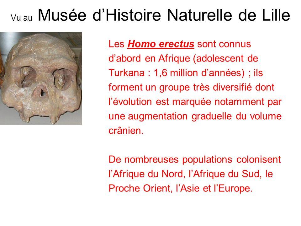 Les Homo erectus sont connus dabord en Afrique (adolescent de Turkana : 1,6 million dannées) ; ils forment un groupe très diversifié dont lévolution e