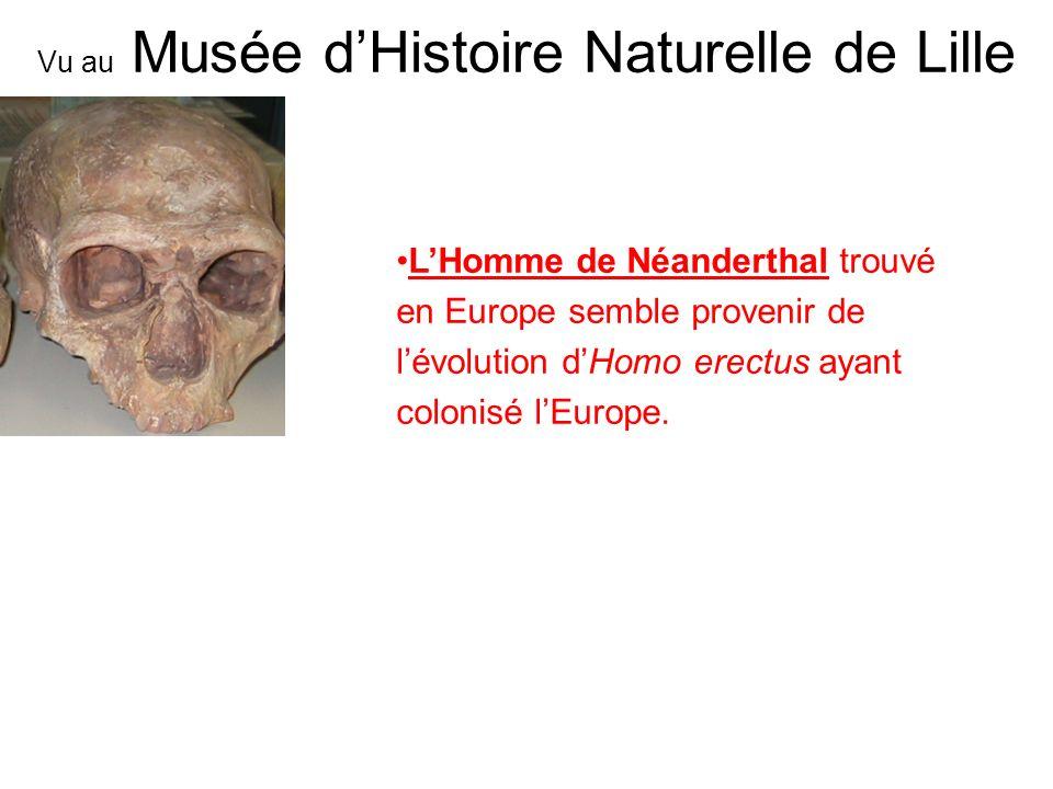 LHomme de Néanderthal trouvé en Europe semble provenir de lévolution dHomo erectus ayant colonisé lEurope. Vu au Musée dHistoire Naturelle de Lille