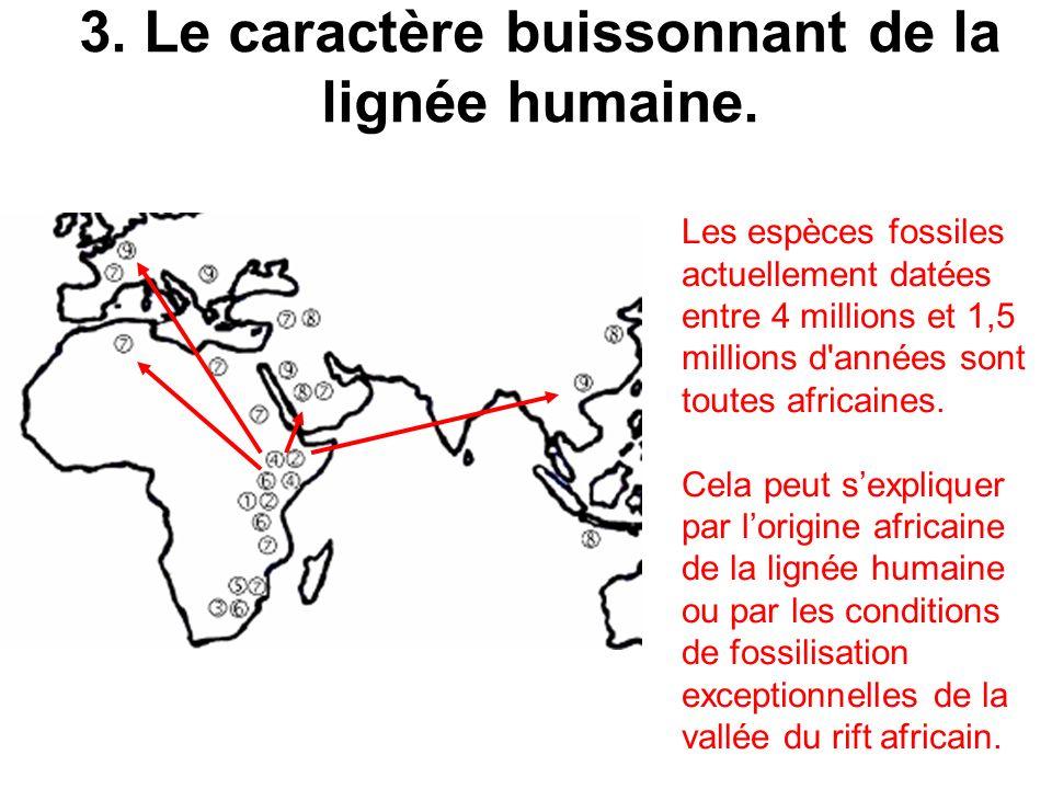 3. Le caractère buissonnant de la lignée humaine. Les espèces fossiles actuellement datées entre 4 millions et 1,5 millions d'années sont toutes afric