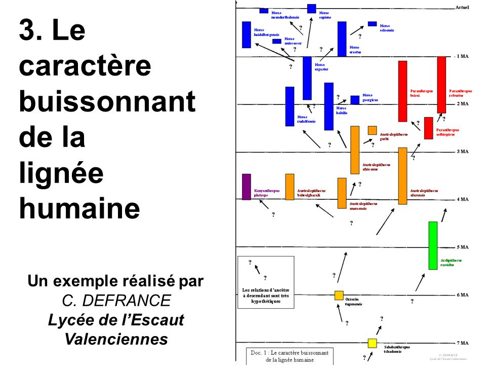 3. Le caractère buissonnant de la lignée humaine Un exemple réalisé par C. DEFRANCE Lycée de lEscaut Valenciennes