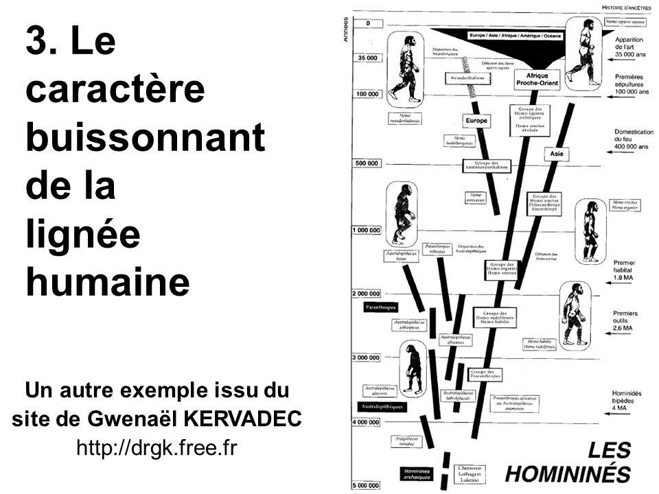 3. Le caractère buissonnant de la lignée humaine Un autre exemple issu du site de Gwenaël KERVADEC http://drgk.free.fr